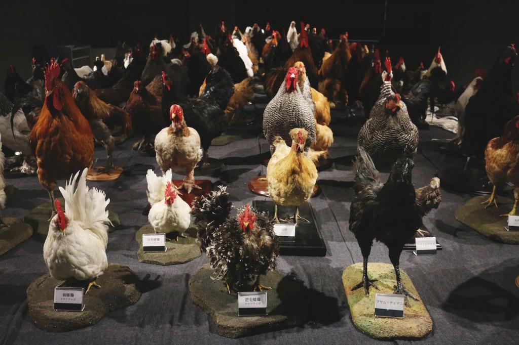 鶏づくし展の全景