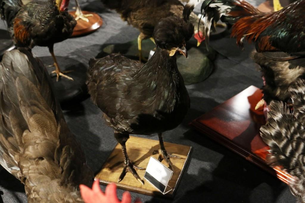 鶏づくし展の「山伏」
