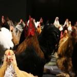 『鶏づくし』展は鶏の魅力そのもので真っ向勝負していた