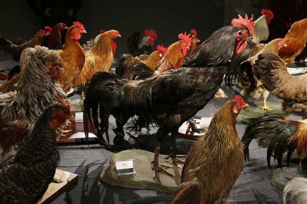 鶏づくし展の「唐丸」