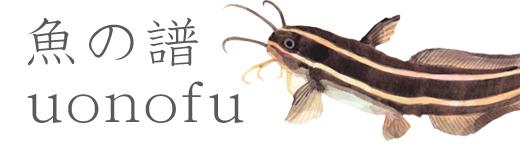 ブログ「魚の譜 uonofu」
