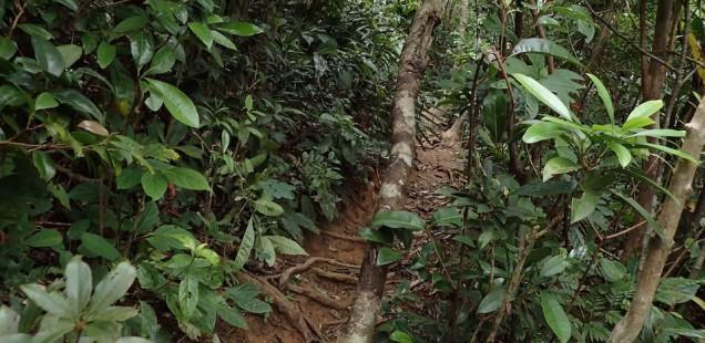 「野底マーペー」の登山道で道を間違えた地元男子とその彼女さんを拾う
