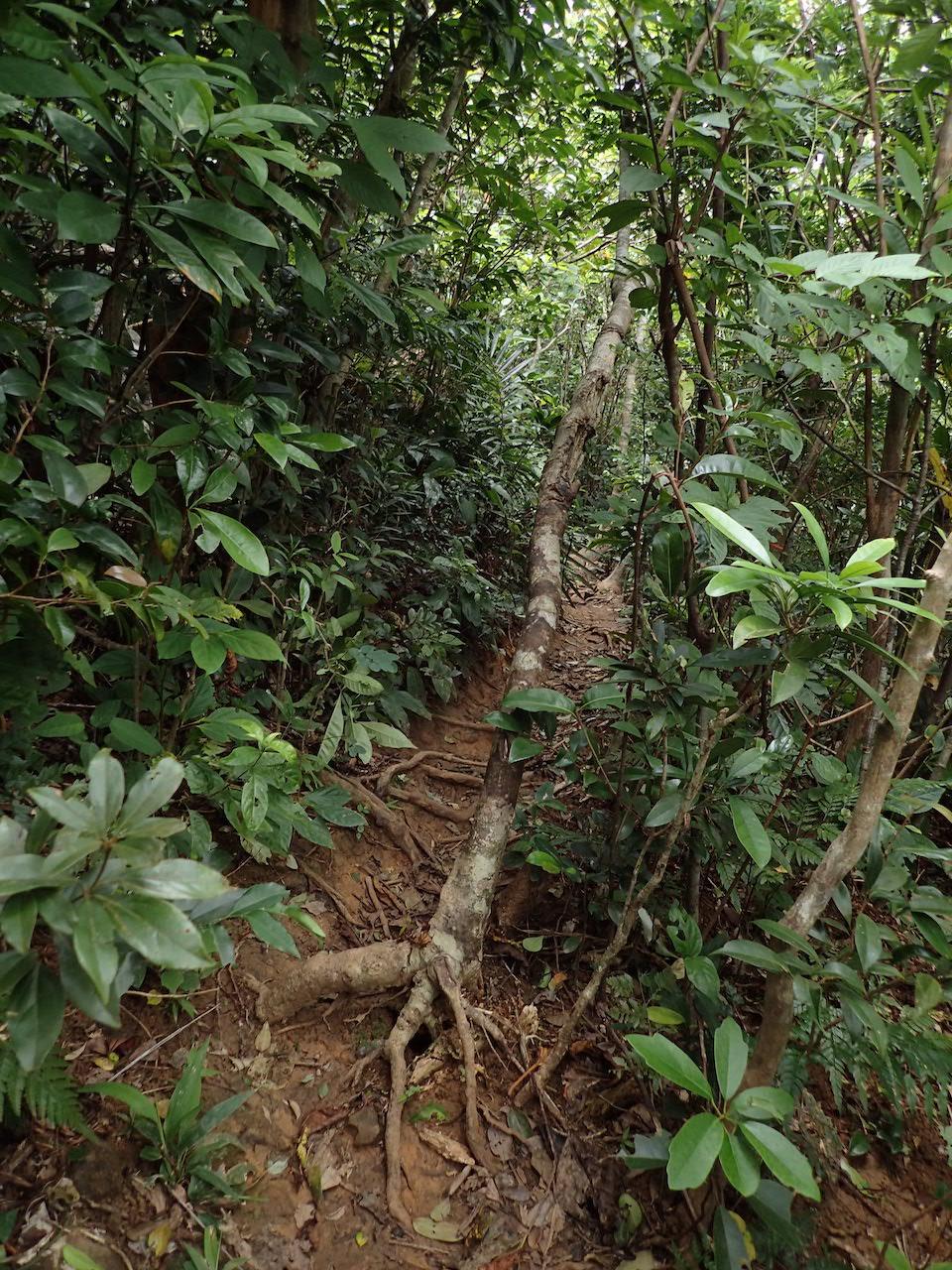 林道は広いところでこれくらい