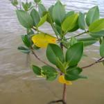 除草剤に抗う木