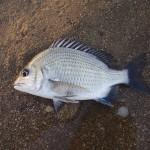 2017年、印象的だった魚との出会い総まとめ