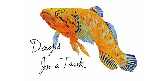 個展「Days In a Tank」展のお知らせ