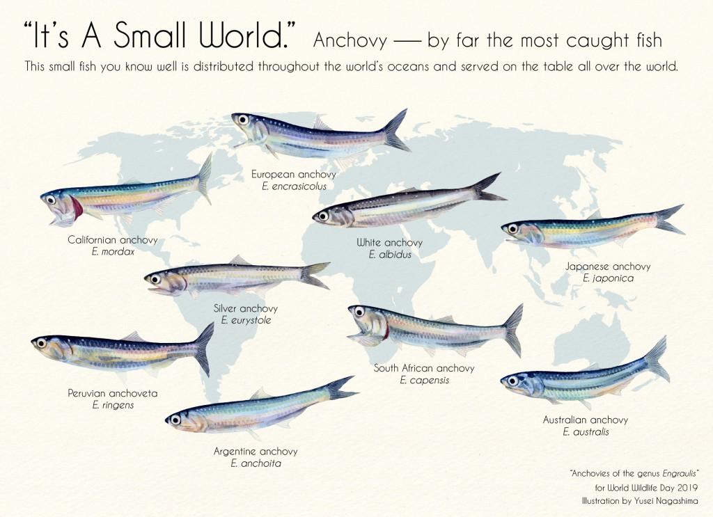 草稿の最終版。英語のたどたどしさはさておき、この段階ではまだカタクチイワシが世界最大の漁獲量だと思っていた