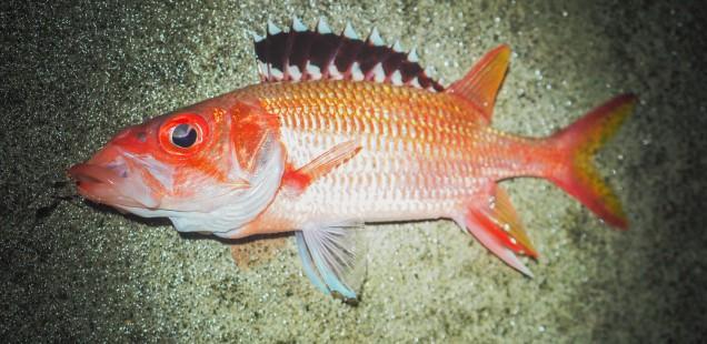 与那国に行ってきました。釣果27魚種まとめ